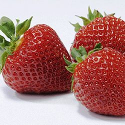 Aardbei Polka – 10 planten